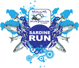 aliwaldive-sardine-run