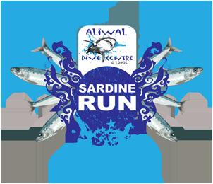 aliwaldive-sardine-run